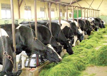 milk industry in sri lanka Milk powder is an essential good in the commodity basket of an average sri  lankan household the sri lankan government regulates milk powder market by .