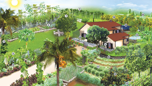 Home Vegetable Garden Ideas In Sri Lanka 6